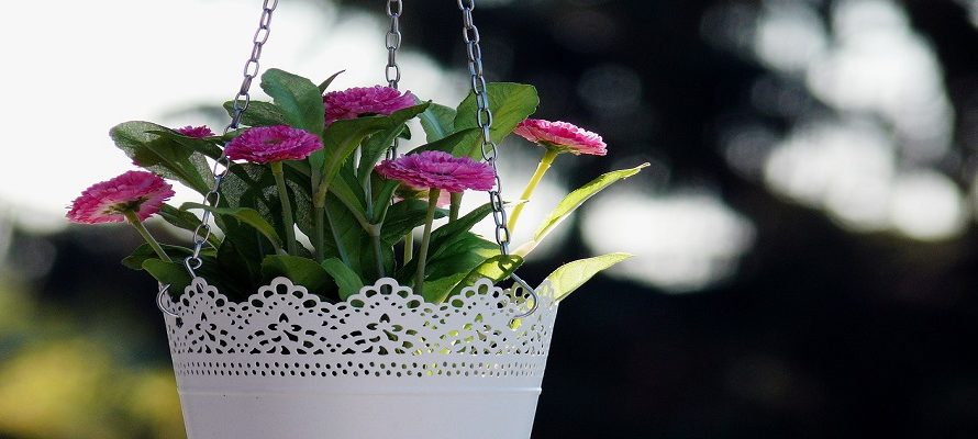 5 Hanging Plants for Balcony